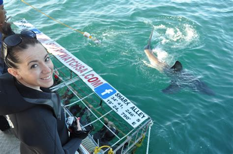 dive with sharks in south africa fly fighter jets more shark cage diving in south africa style hi club