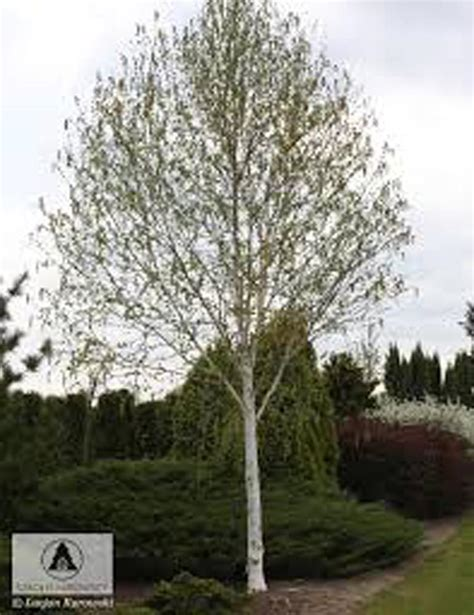 small backyard trees take a bough tree care s ideas on 5 trees for a small