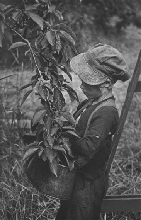 w eugene smith 8415303297 elisebrown w eugene smith migrant workers johnie fay picking cherries 1953 w eugene