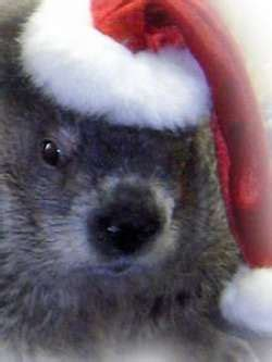 groundhog day birmingham zoo 40 best images about smith lake jake alabama s groundhog