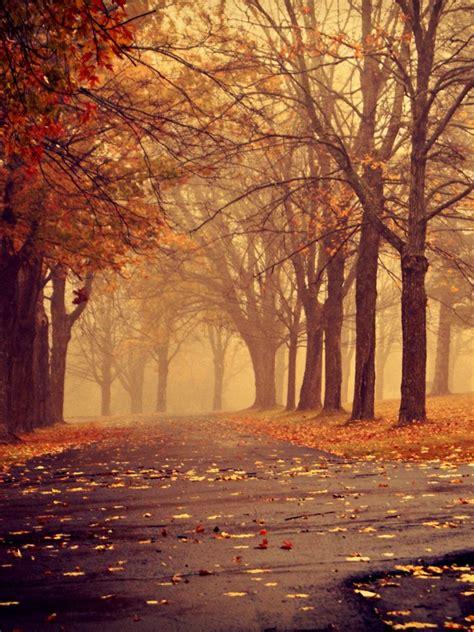 park  autumn ipad wallpaper