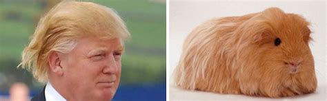 donald trump looks like 16 things that look like donald trump s twin