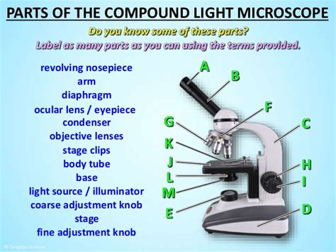 light source microscope function microscope light source function decoratingspecial com