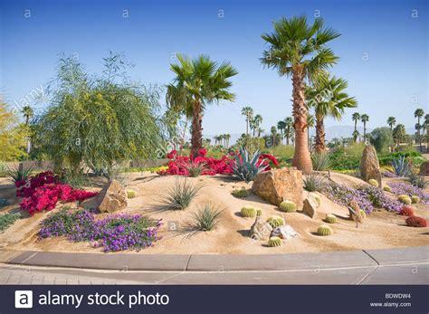 desert landscape plants outdoor goods