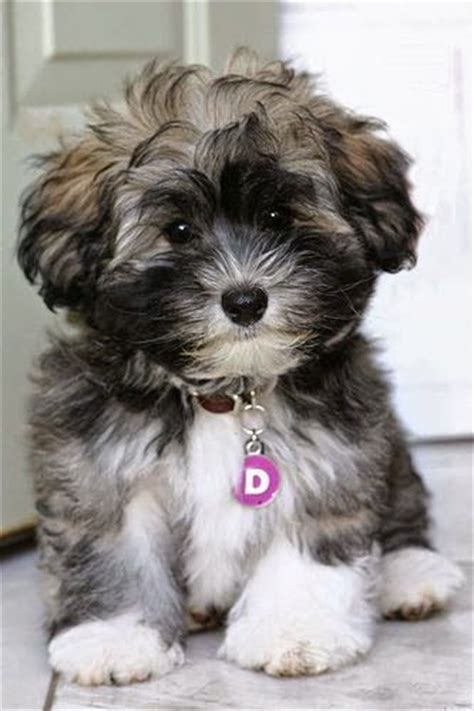 small apartment dogs the 10 best breeds for small apartment general best breeds