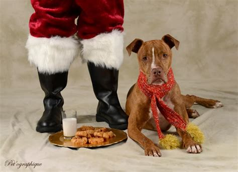 nevada spca animal rescue i ve been can i