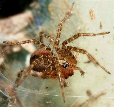 Garden Spider Behavior by 1779 Best Images About Bugs On Beautiful
