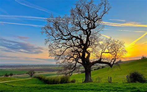 landscape trees stands the vast world of lonely trees photography wallpaper 4 landscape wallpapers free