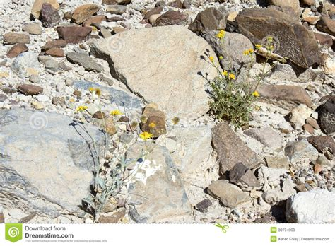 imagenes flores salvajes flores salvajes del desierto im 225 genes de archivo libres de