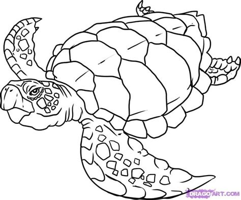 underwater sea creatures coloring pages underwater creatures drawing google search teaching