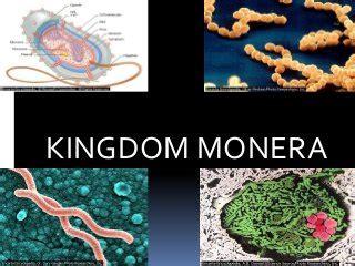 modern classification  living organisms kingdom monera  protista science