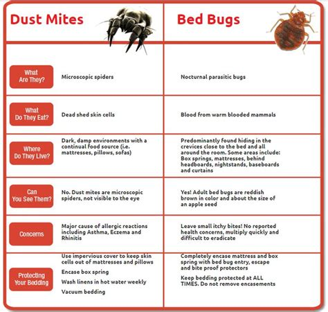 dust mites vs bed bugs 27 best house dust mites images on pinterest dust mites
