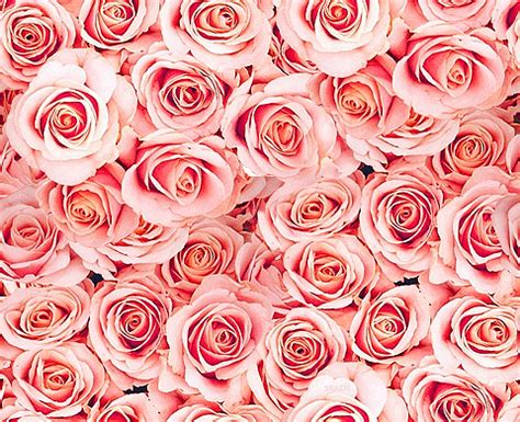 tumblr themes roses free best images free best images collections it s 100