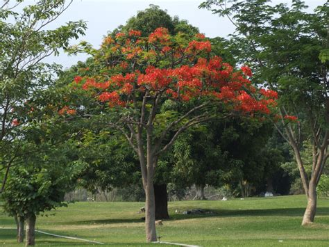 file tree with orange flowers jpg wikimedia commons