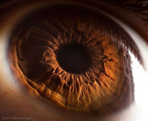 21 extreme close ups of the human eye 171 twistedsifter