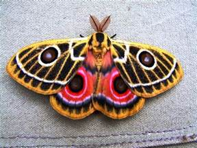 colorful moth bull elephant gallery shoor travel kenya