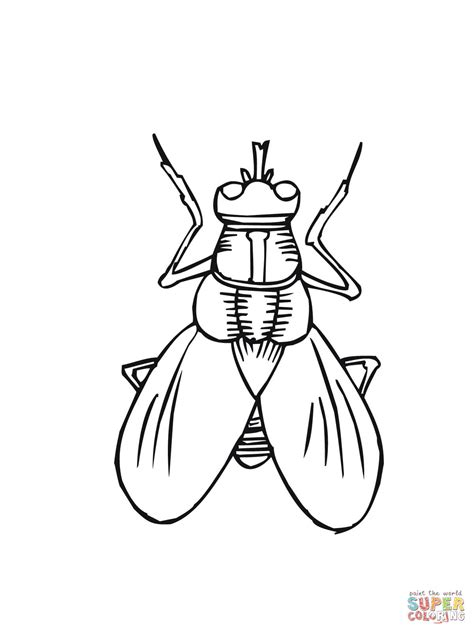 House Fly Coloring Online Super Coloring Fly Coloring Page