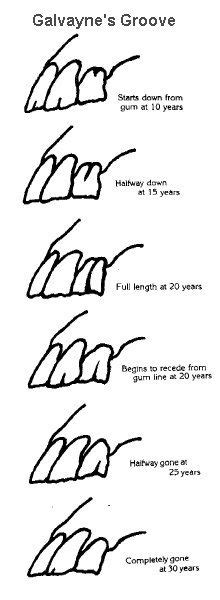 how to tell a s age www teeth age chart the s teeth care deb s