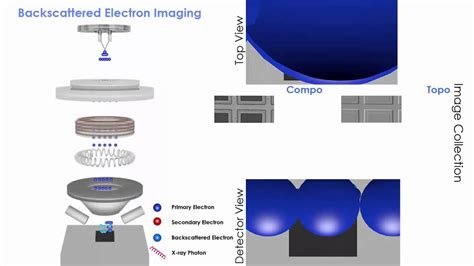 quanta scanning electron microscope thermo fisher scientific
