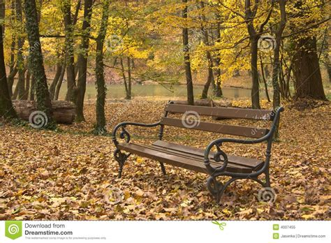 bench in forest bench in forest royalty free stock photo image 4007455
