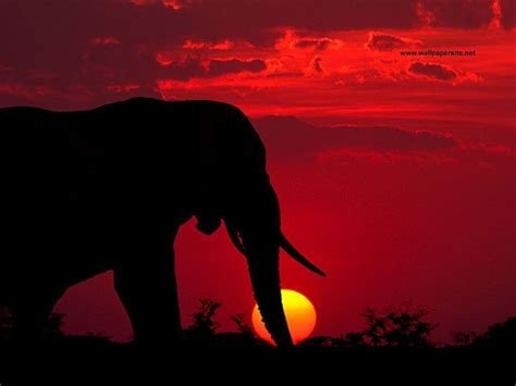 cool elephant wallpaper elephant desktop backgrounds wallpaper cave