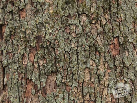 pattern texture photography tree bark texture free stock photo image picture tree