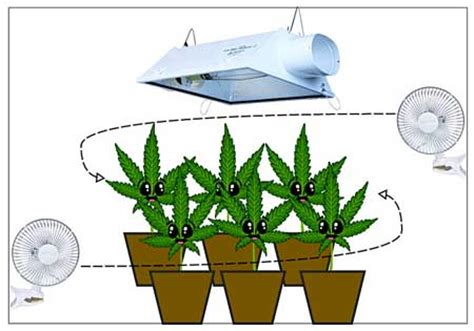 grow room air circulation 7 step remedy to 99 of cannabis growing problems grow easy