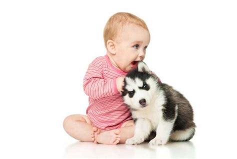 how do dogs babies why do we use the same voice to talk to babies and dogs mental floss