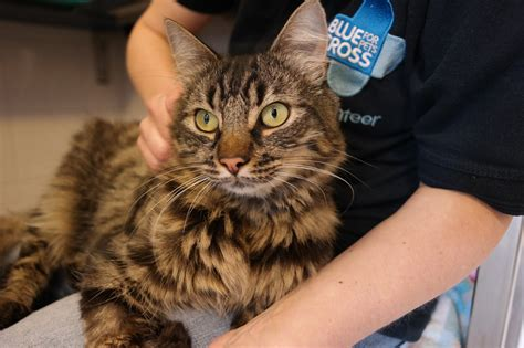 old cat disease health issues with old cats kidney disease and high