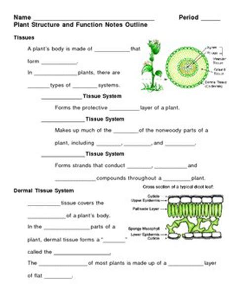 plant structures quiz worksheet third grade. plant. best