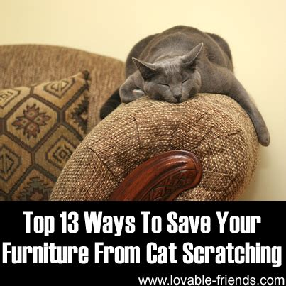 how to get your cat to stop scratching the couch top 13 ways to save your furniture from cat scratching