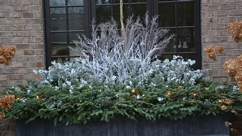 winter window boxes winter windowboxes find your style grow beautifully