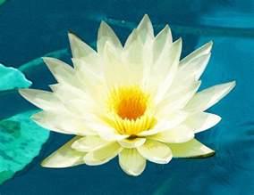 La Flor De Lotus Significados De Los Tatuajes De Flor De Loto Batanga