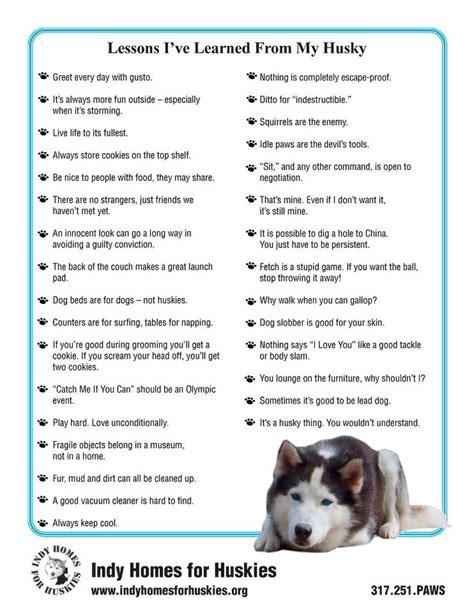 7 Facts On Huskies by The 25 Best Siberian Husky Facts Ideas On