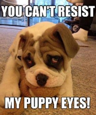 Puppy Dog Eyes Meme - aww puppy eyes dogs pinterest eyes puppys and