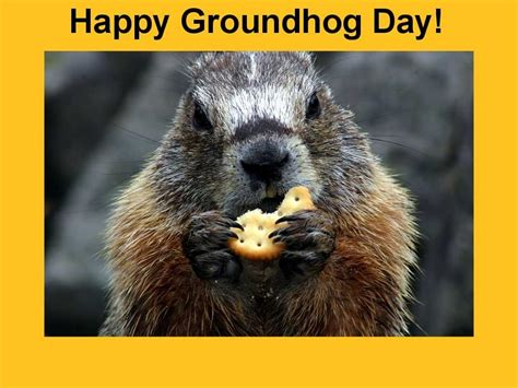 groundhog day tradition math oak meadow blogs