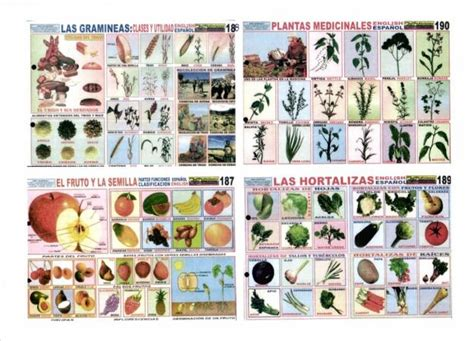 imagenes educativas gratis donde puedo imprimir laminas escolares gratis imagui