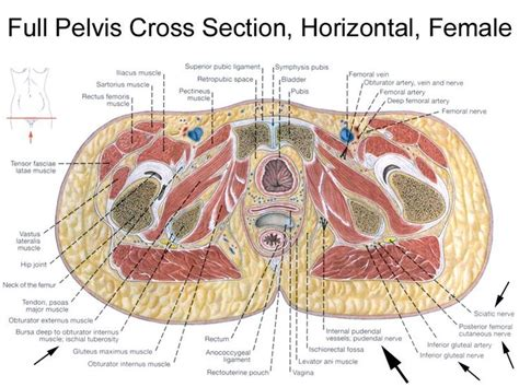 nerve pain after c section i think my issues are from femoral vein obturator artery