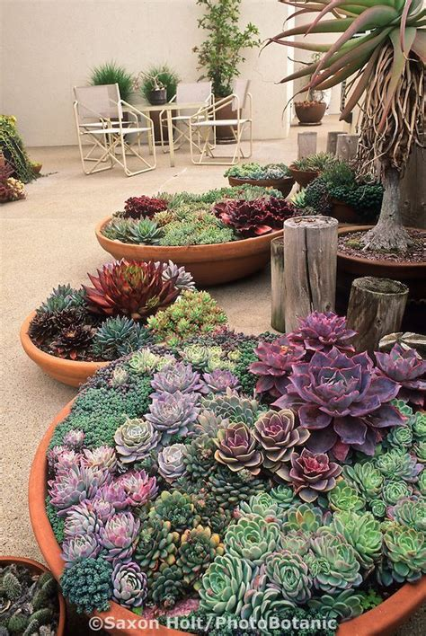 460 best images about succulent pictures on pinterest