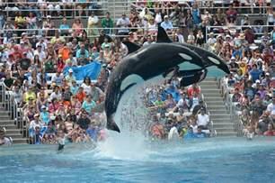 Sea World Seaworld San Diego Ending Killer Whale Theatrical Shows