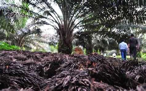 Minyak Kelapa Sawit Per Ton ekspor cpo ri turun jadi 2 6 juta ton