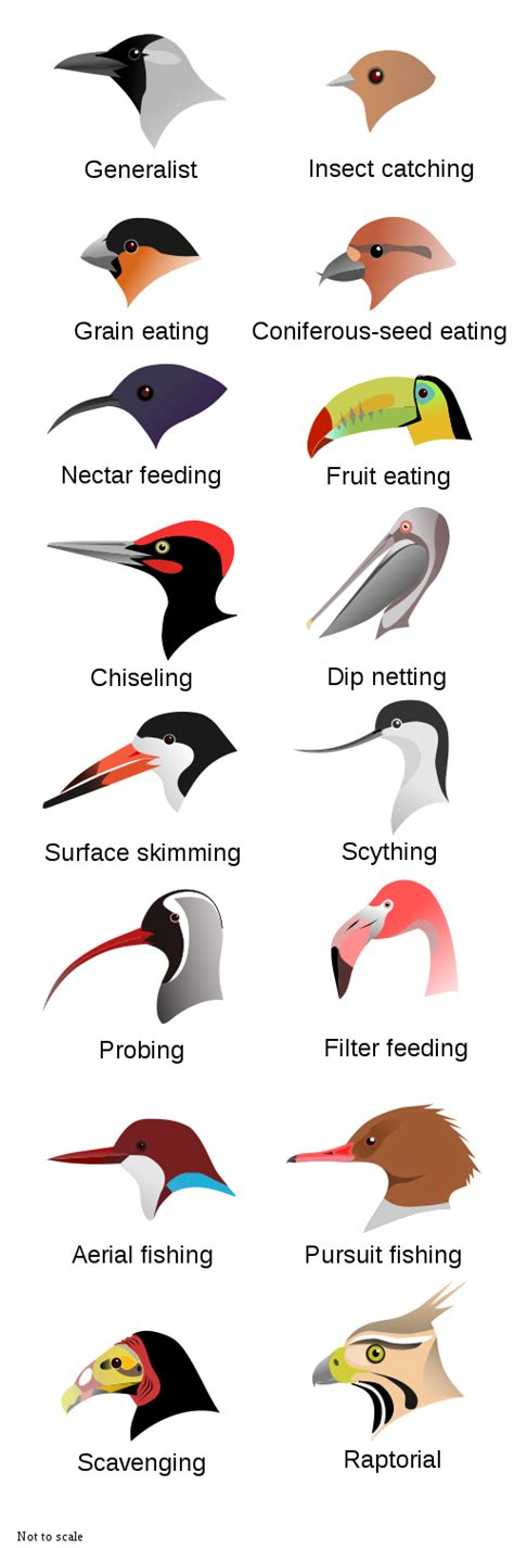 different types of birds images frompo