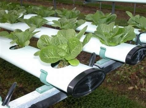 the good the bad and the ugly hydroponic gardening green diary green revolution guide by