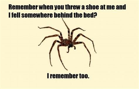 Spider In House Meme - funny pictures of a spider hidden behind your bed coming