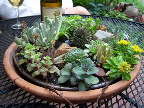 Succulent Gardens by Succulents Are Succulent They Make Me Happy Garden Drama