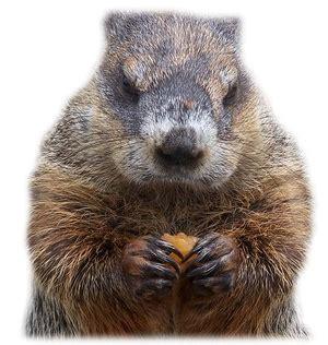 groundhog day ultra hd groundhog png hd transparent groundhog hd png images