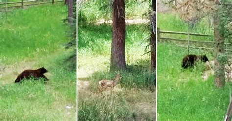 backyard deer hunting family films mama bear s deer hunt in colorado backyard video gogo papa
