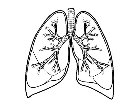 coloring pages of heart and lungs free coloring pages of heart lungs