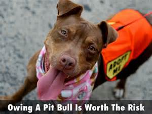 Sergeant Stubby Powerpoint Owing A Pit Bull Is Worth The Risk By Rbaudhuin