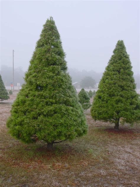 welcome merry little christmas tree farm